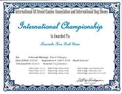 Hera International Championship Certificate